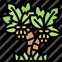 palm, tree, tropical, plant, beach