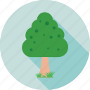 ecology, forest, nature, shrub tree, tree icon