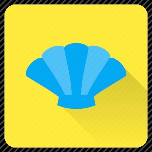 beach, collect, pearl, sea, seashell, shell, summer icon