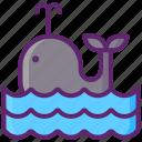 animal, sea, whale