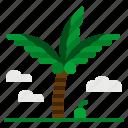beach, coconut, palm, summer, tree