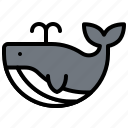 animal, mammal, summer, whale