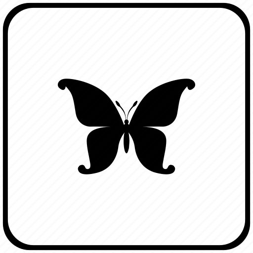 border, butterfly, rounded, square, swallowtail icon