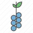 berry, food, fresh, fruit, grapes, summer, vegan icon