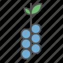 berry, food, fresh, fruit, grapes, summer, vegan icon