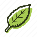 green, herb, ingredient, leaf, plant, tea, tea leaf icon