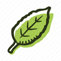 green, herb, ingredient, leaf, plant, tea, tea leaf icon