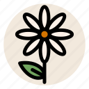 chamomile, daisy, flower, herbal tea, leaf, plant, tea icon