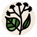 flower, herb, herbal tea, linden, linden flower, tea icon