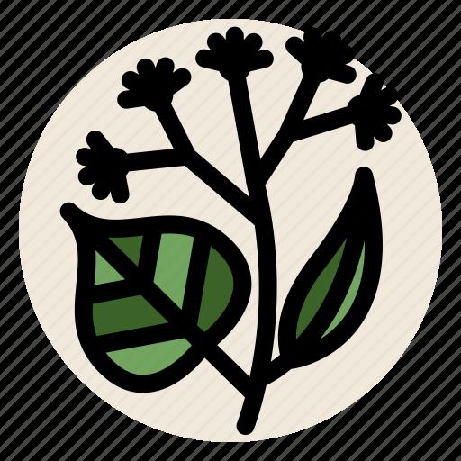 flower, herb, herbal tea, linden, linden flower, tea icon