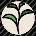 herb, hot drink, plant, tea, tea leaves icon