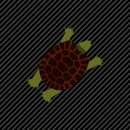 animal, character, cute, pet animal, reptile, turtle, wildlife icon