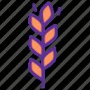 autumn, gluten, grain, harvest, millet, thanksgiving, wheat