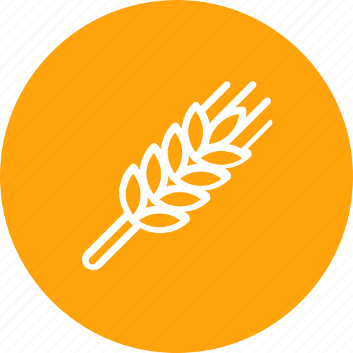 grain, harvest, thanksgiving, wheat icon