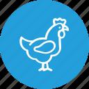 bird, chicken, food, hen, thanksgiving, turkey