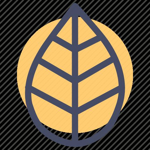 autumn, leaf, thanksgiving icon