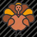 animal, bird, thanksgiving, turkey