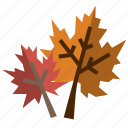 dry, autumn, fall, nature, maple, leaves