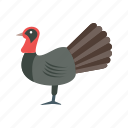 turkey, roasted chicken, meat, food, roast, roasted turkey icon