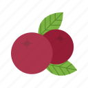 cranberries, cranberry, food, fresh, jelly, red, thanksgiving icon