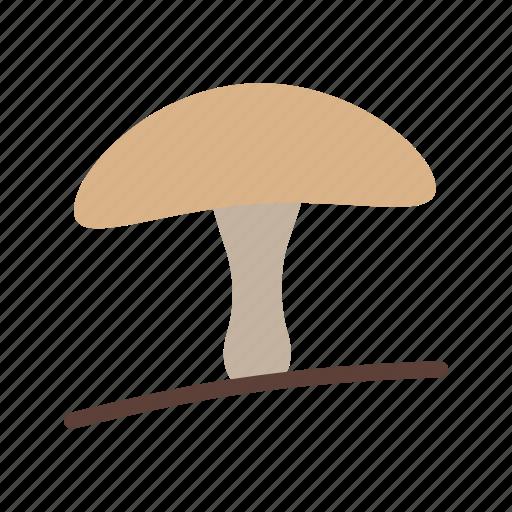 food, gourmet, healthy, mushroom, organic, oyster icon