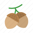 brown, nature, tree, nut, oak, seeds, acorn icon