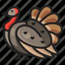 animal, bird, chicken, thanksgiving, tuekry