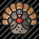 animal, bird, chicken, thanksgiving, turkey