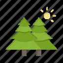 fir, forest, nature, trees