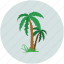 palm trees, trees, tropical trees, young palm icon