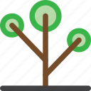 decoration, environment, garden, grow, nature, plant, tree icon