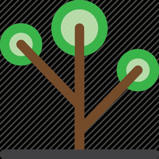 decoration, environment, garden, grow, nature, plant, tree icon