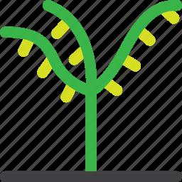 farm, grow, nature, oil, palm, plant, tree icon