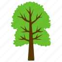 cimmaron ash, forest, fraxinus pennsylvanica, greenery, tree icon