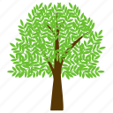 ash tree, deciduous tree, firewood, greenery, olive family icon