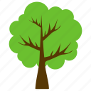 aesculus hippocastanum, chestnut tree, ecology, evergreen tree, tree icon
