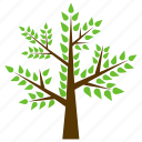deciduous tree, forestry, honey locust, nature, thorny locust icon