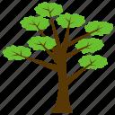 forest, greenery, huangshan pine, pine topiary, pinus hwangshanensis icon