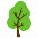 cottonwood, fast growing tree, hedge trees, hybrid trees, poplar tree icon