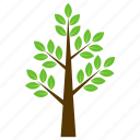 curry tree, generic tree, leafy tree, murraya koenigii, tree icon