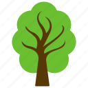 agriculture, american elm, decorative tree, forest tree, forestry icon