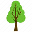 botany, forestry, generic tree, hornbeam tree, woods icon