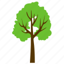 basswood tree, forest, generic tree, greenery, odorless wood icon