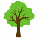 basswood tree, forest, generic tree, green foliage, odorless wood icon