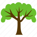 beech tree, british trees, dense, firewood, forestry icon