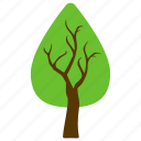 cedar tree, evergreen tree, generic tree, pine tree, thuja tree icon