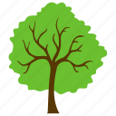 ecology, flowering tree, generic tree, jerusalem thorn, nature icon