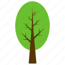 columnar beech, evergreen tree, forest, generic tree, tree icon
