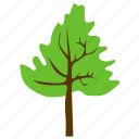 agriculture, broad leaves tree, cedar tree, cedar wood, forest tree icon