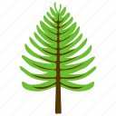 coniferous tree, fir tree, nature, pine tree, poplar tree icon